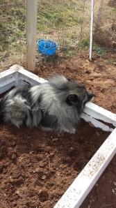 Garden Bed dog